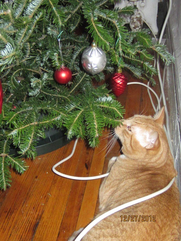 Didn't you watch National Lampoon's Christmas Vacation, cat ...