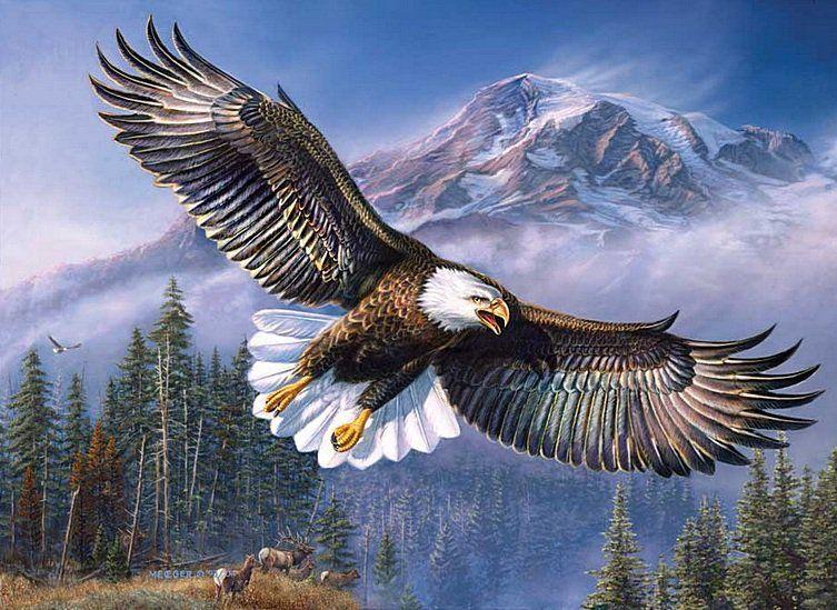 фото орла горного