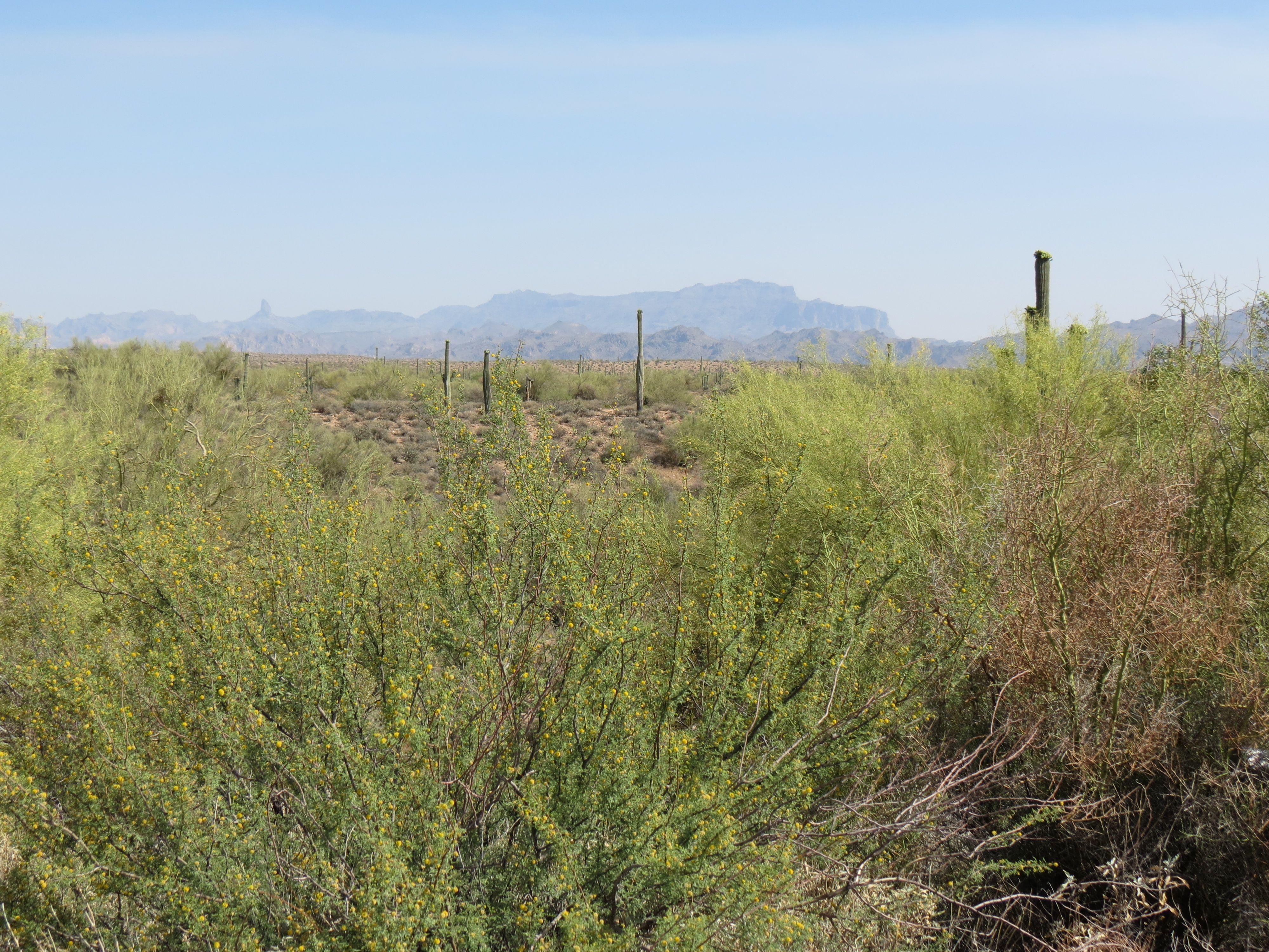 Scenery near Gila County AZ