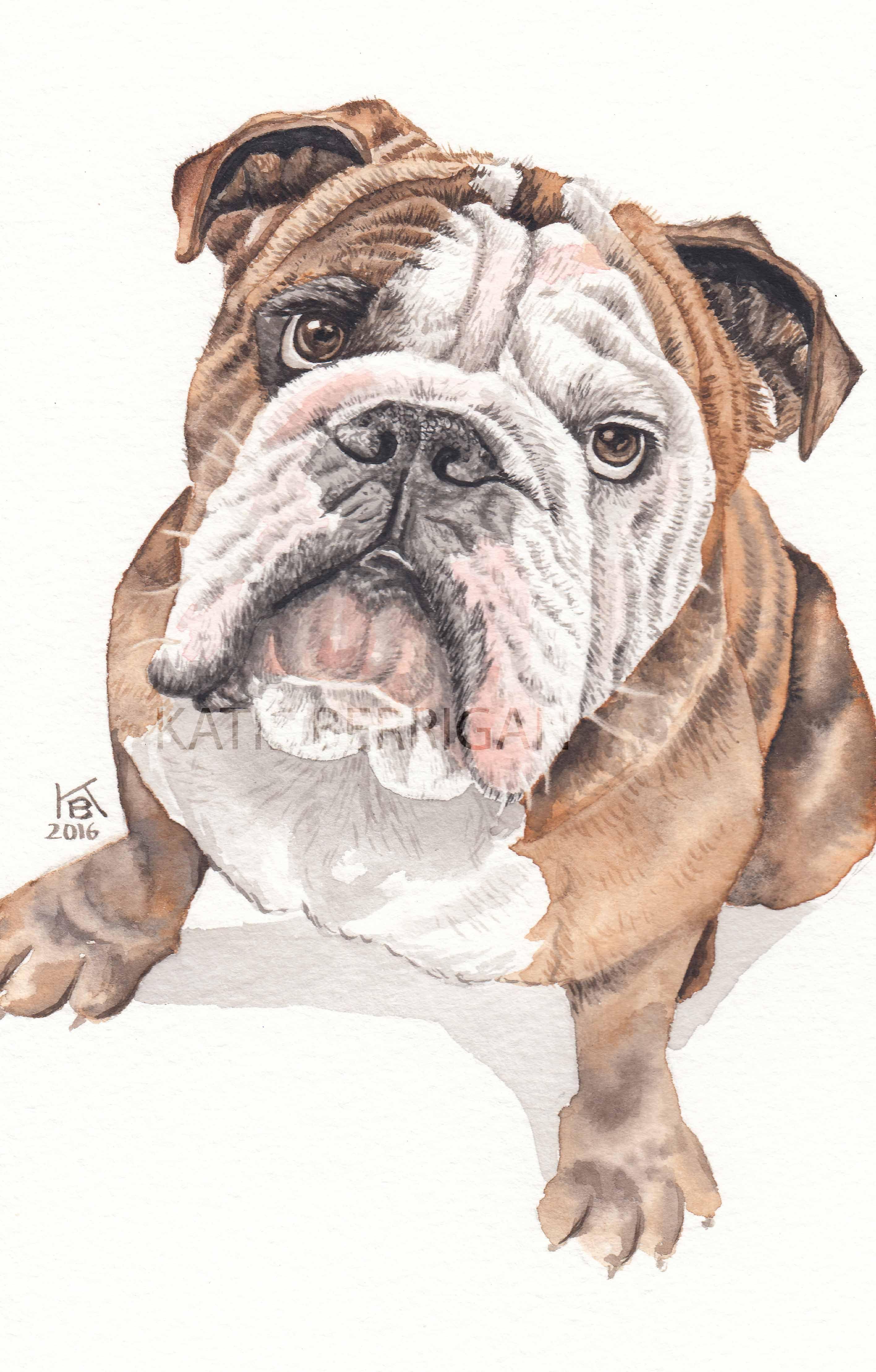 Watercolor bulldog / pet painting/ dog lover English