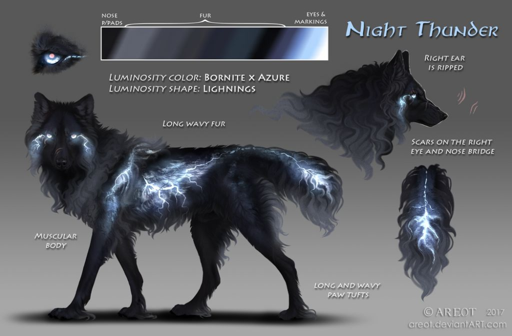 Photo of #24 Night Thunder by areot on DeviantArt