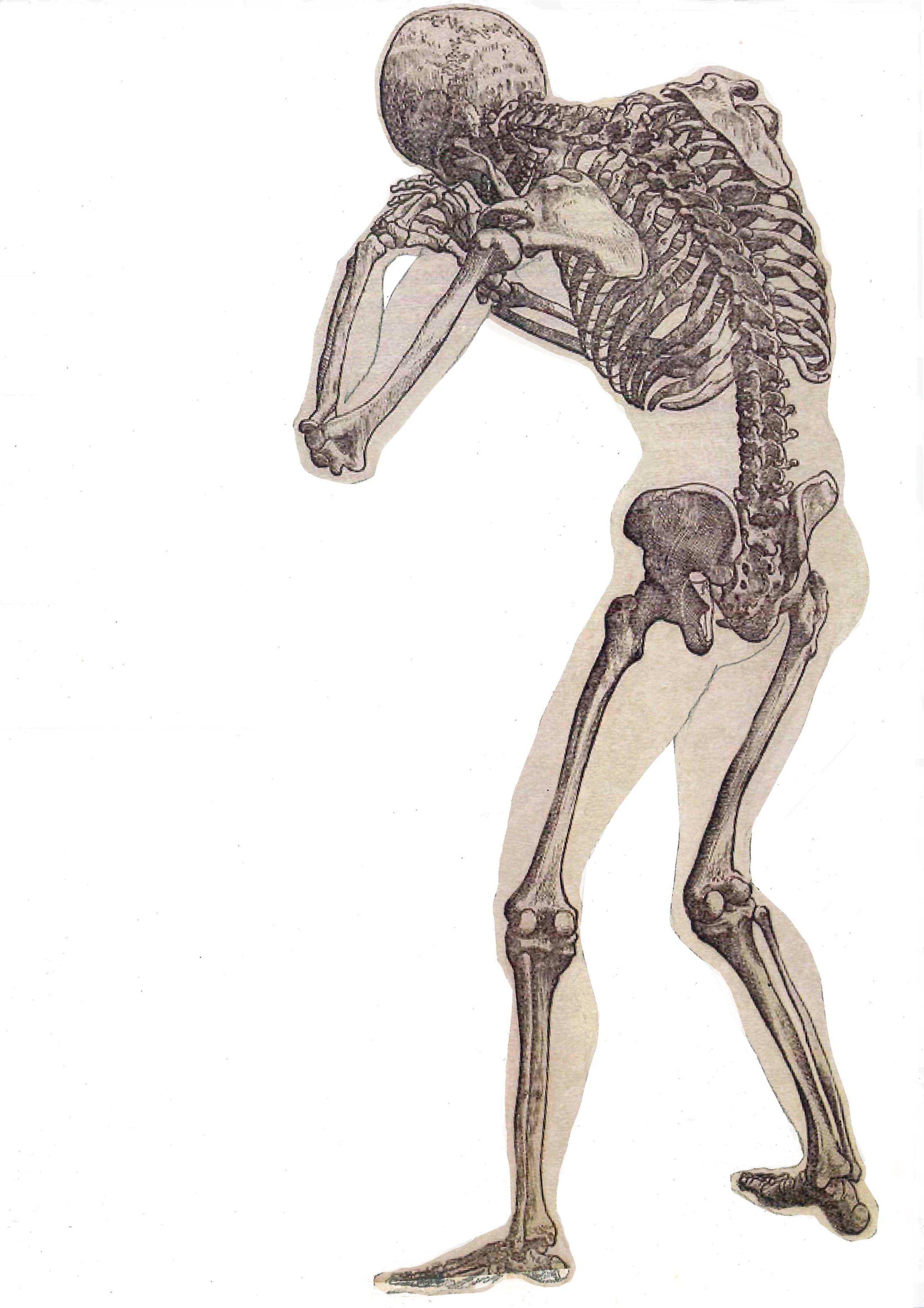 Esqueleto vista posterior. Juan Azpeitia | Cuaderno 1º Analítico ...