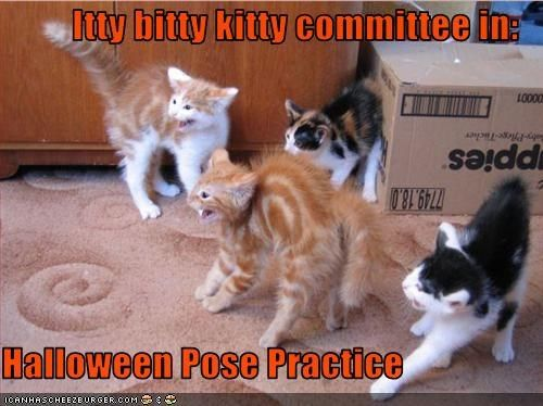 Itty bitty kitty committee in:  Halloween Pose Practice