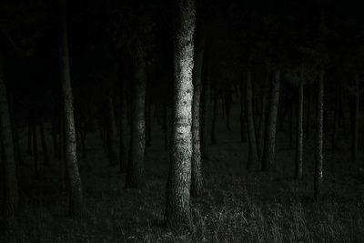 Bosque de sombras