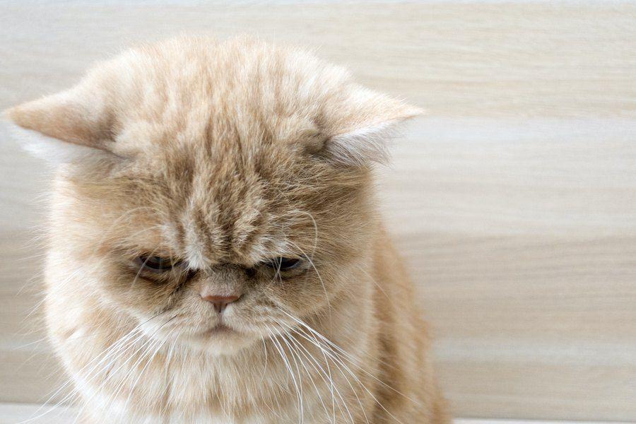 猫が落ち込んでしまう 飼い主のng行動 5選 Yahoo Japan 猫 可愛い猫 猫の行動
