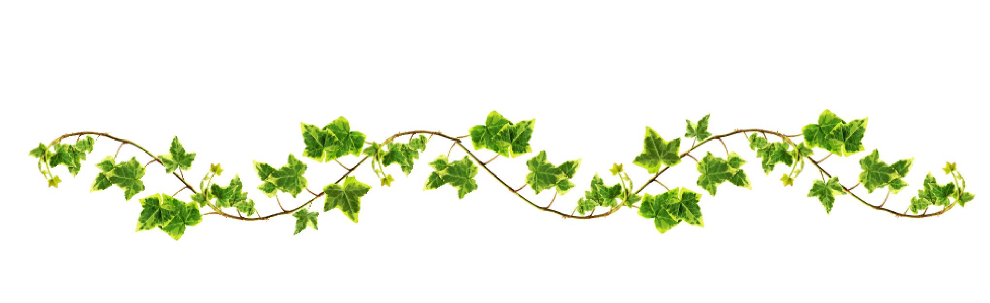 vines on pinterest - photo #30