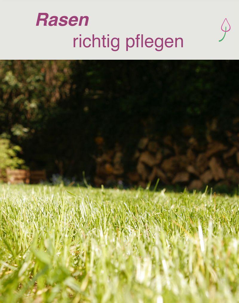 Rasen Pflegen Rasen Gruner Rasen Garten