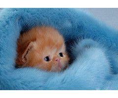 .omg cute