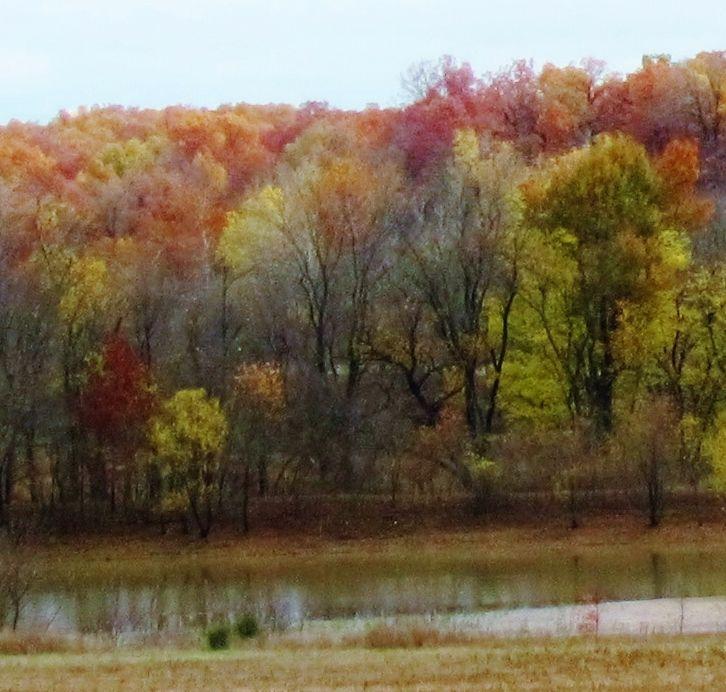 Color/ trees/ field afar 1
