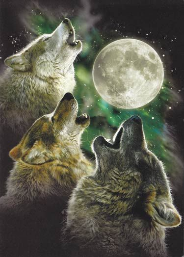 Three Wolf Moon Greeting Cards 6 Pack Wolf Wallpaper Wolf