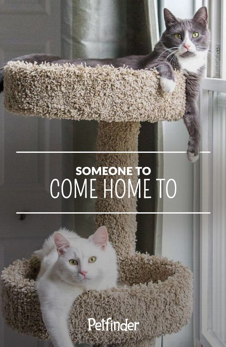 About Pet Adoption Pet Adoption Adoption Cat Adoption