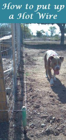 Hot Wire Fence For Dogs Goldenacresdogs Com