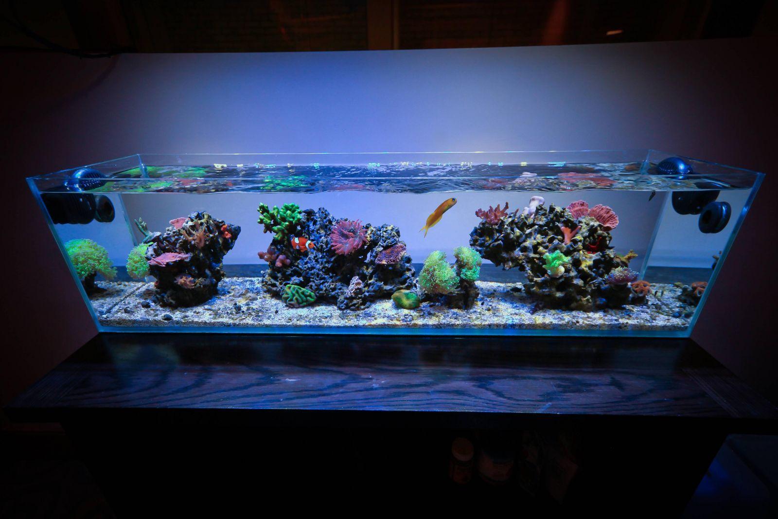 3 foot office nano wide angle full tank shot nano for Wide fish tank