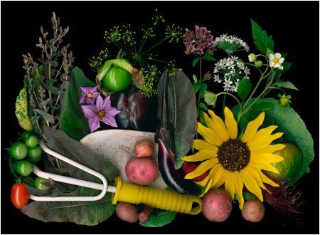 Page 2, Organic Gardening Scans By Ellen Hoverkamp - Scanner Photography By Ellen Hoverkamp