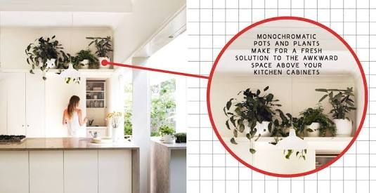 Plants Above Kitchen Cabinets Google Search In 2019