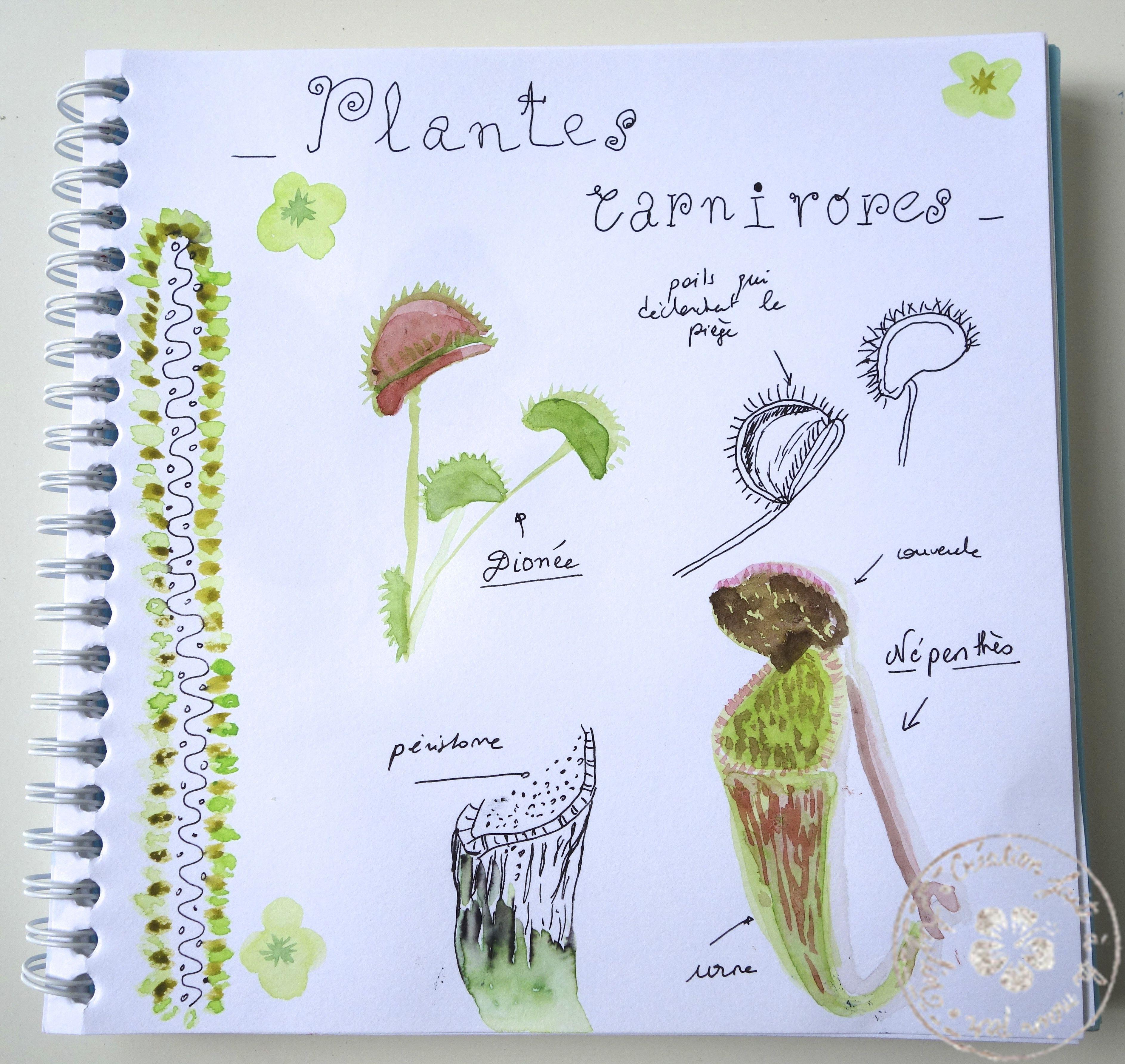 Plantes Carnivores Plante Carnivore Plante Carnivore