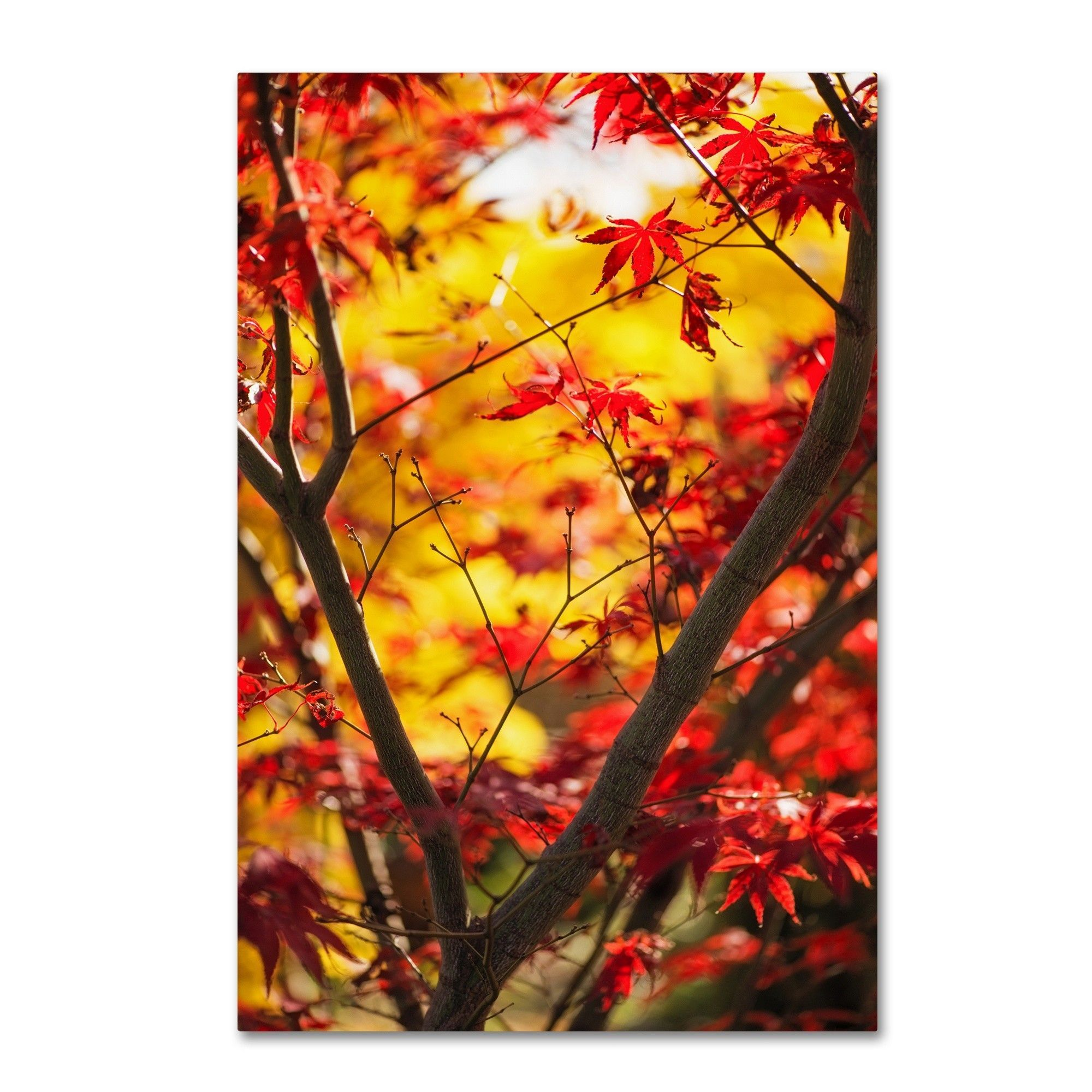 'Morning Jive' by Philippe Sainte-Laudy Photographic Print on Wrapped Canvas