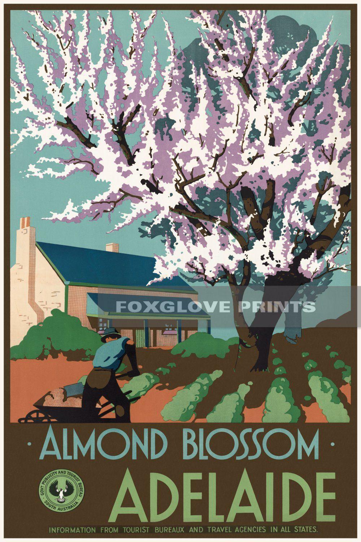 Almond blossom adelaide poster print adelaide australia