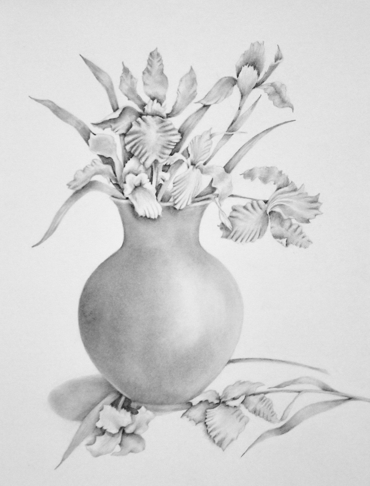 Pencil Drawing Of Irises In Vase Flower Art Pencil Art