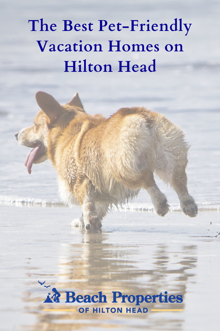 Beach Properties Is Proud To Offer The Best Pet Friendly Vacation Rentals On Hilton Hea Pet Friendly Vacations Pet Friendly Vacation Rentals Pet Friendly Beach