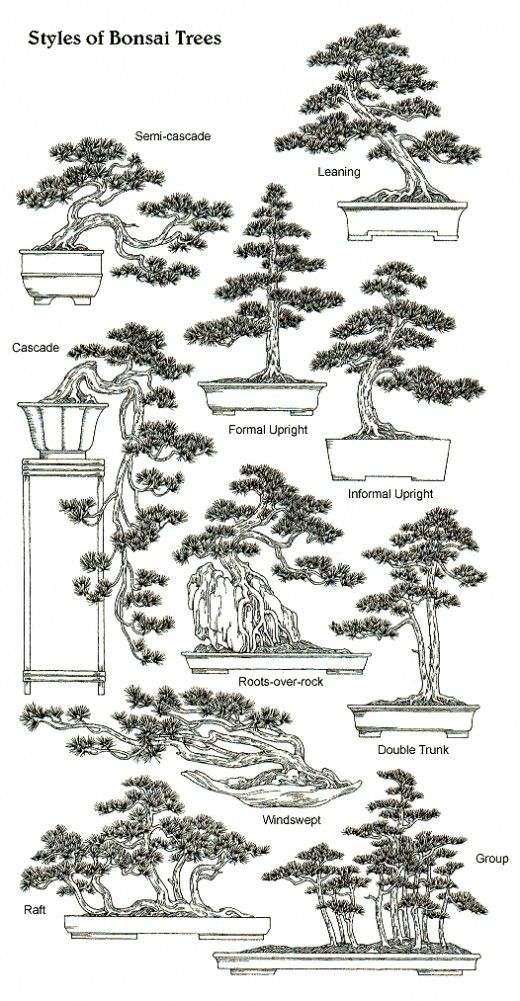 a beginner u0026 39 s guide to bonsai