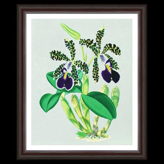 Vintage Orchids Framed Art Print By Evie Empire Framed Art Prints Graphic Art Art