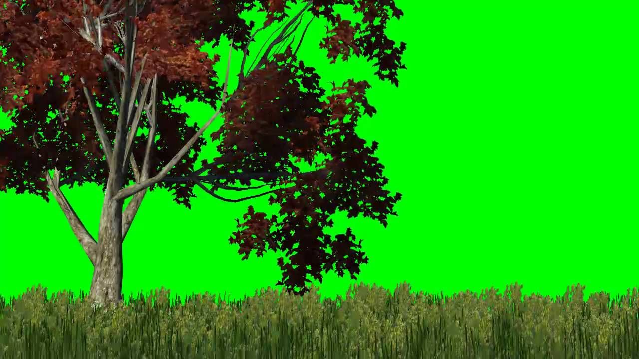 How To Make A Green Screen Background In Stop Motion Studio Pro Stop Motion Green Screen Backgrounds Greenscreen