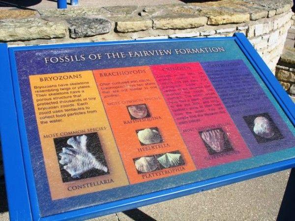day 213 trammel fossil park cincinnati fossils and ohio