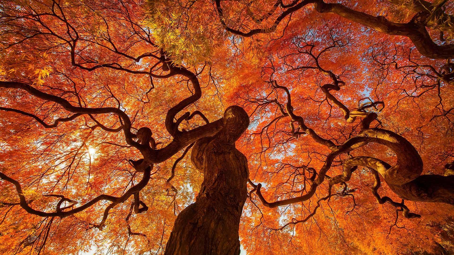 Huge Wallpaper Dump Windows 10 Lock Screen Images 1920 X 1080 Autumn Trees Photo Tree Nature Wallpaper