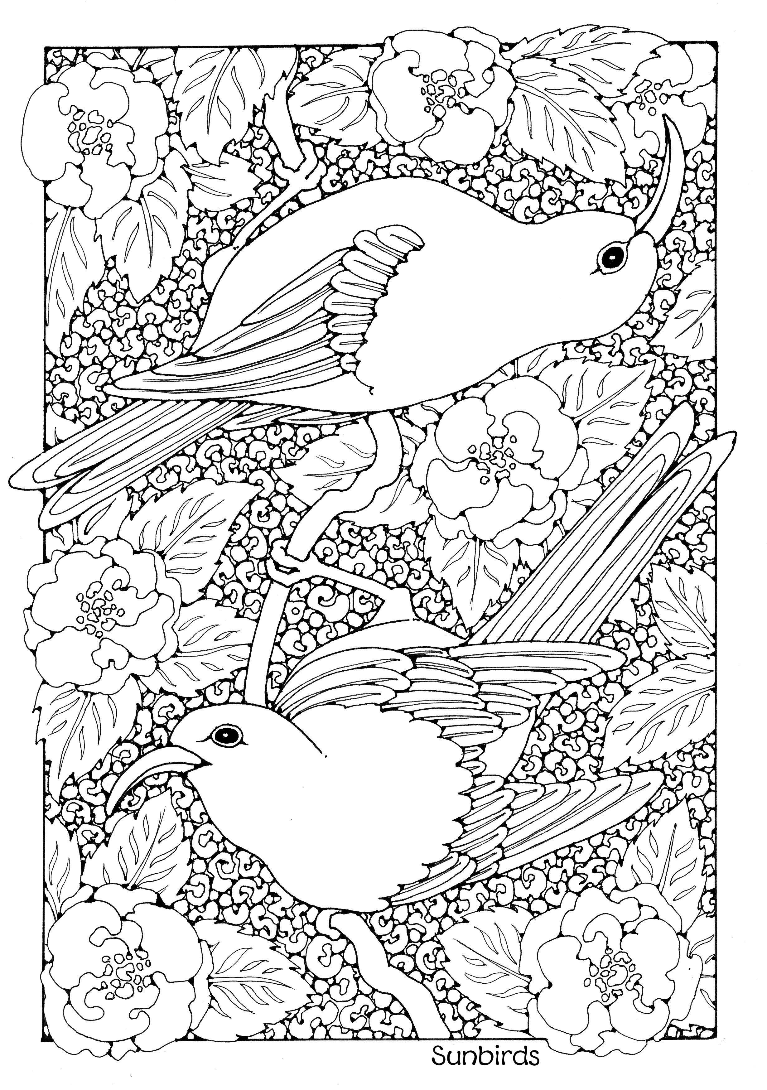 Excepcional Colorear Chickadee Adorno - Dibujos Para Colorear En ...