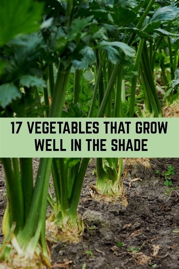 17 Vegetables That Grow Well In The Shade