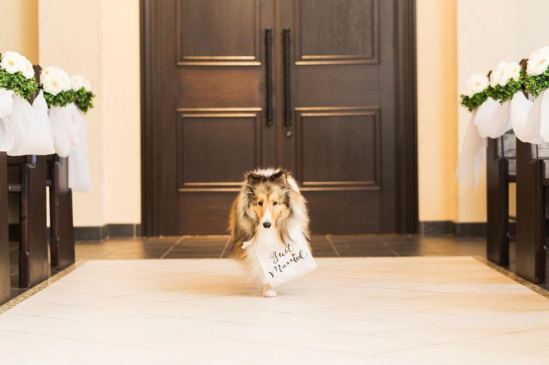 リングドックだけじゃない ペット参加型の結婚式演出11選 結婚式準備はウェディングニュース ペット 犬 ドック