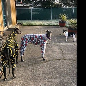 DOWNLOAD SEWING PATTERN / Greyhound Pajamas sizes Medium