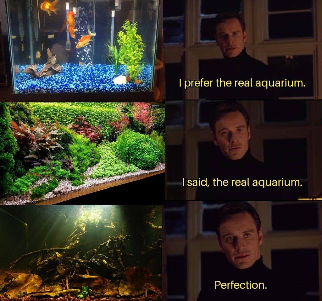 Real Aquarium Pet Fish Betta Fish Fish Tank