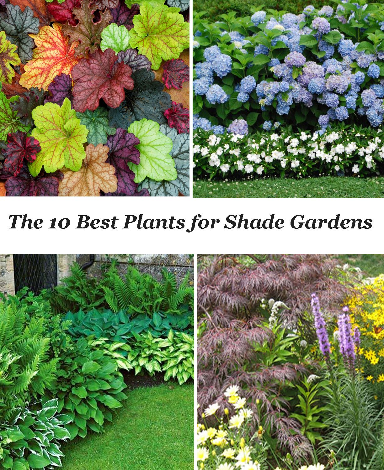 10 Best Shade Garden Plants 1.~ Hosta 2.~Heuchera 3.~