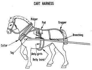 horse cart diagram horse harness diagram - google search | costume | horse ... work horse harness diagram