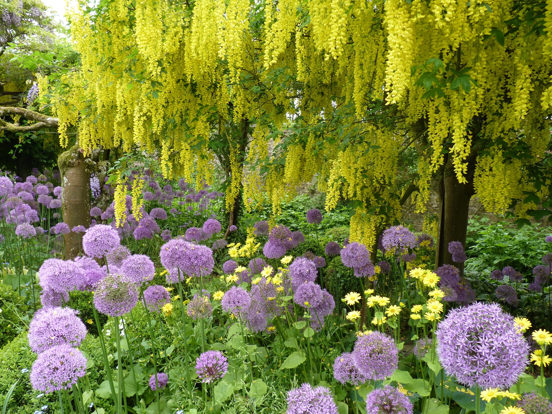 highgrove garden google search gardening green thumb. Black Bedroom Furniture Sets. Home Design Ideas