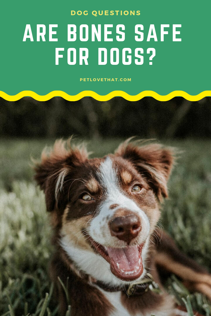 Are Bones Safe for Dogs Dog deals, Pets, Dogs