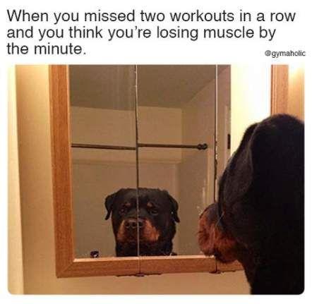Trendy fitness memes hilarious gym humour 66+ ideas #fitness #memes #humour