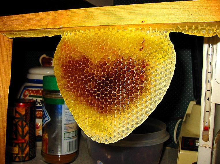 The Practical Beekeeper Beekeeping Naturally Bush Bees By Michael