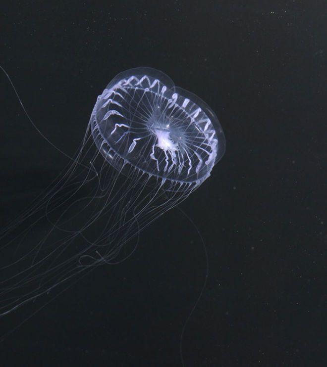 In Photos Spooky Deep Sea Creatures