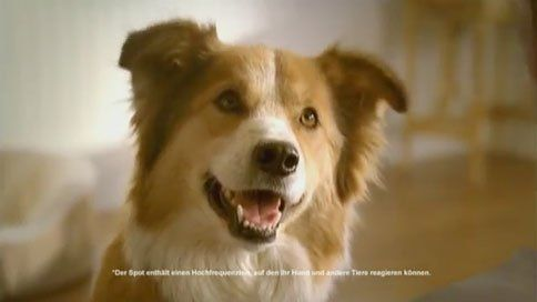 Pet Food Brand Makes Tv Commercial Only Dogs Can Hear Dogs Pets