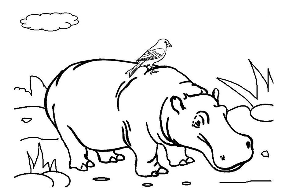 Hippo Coloring Page Coloring Pages Animal Coloring Pages Animal Printables
