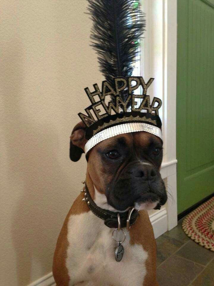Boxer new year funny boxer boxer dogs boxer love