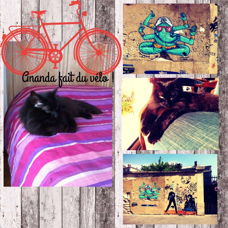 Ananda, Parisian cat