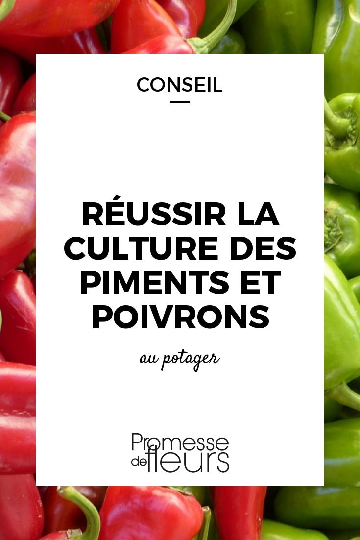 Comment Planter De L Échalote réussir la culture des piments et poivrons | cultiver les