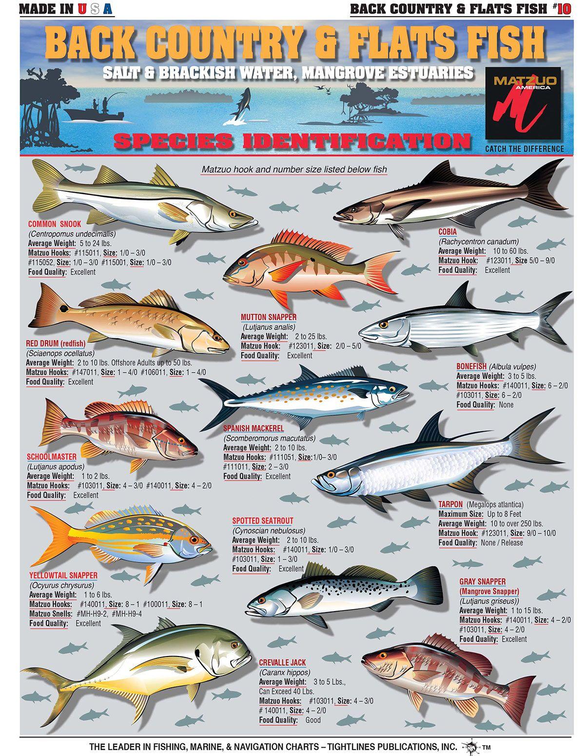 Pin By Daviper On Fishn Riggs Charts Lures Big Game Fishing Fish Chart Fish