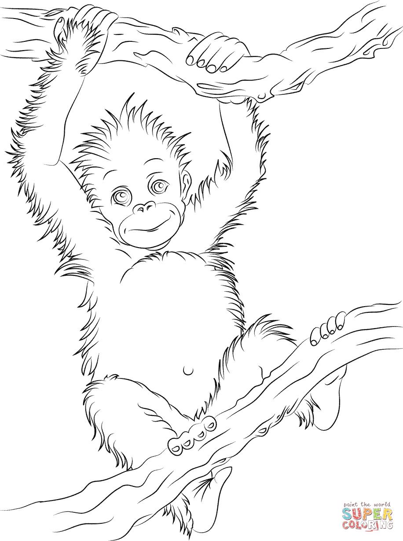 Cute Baby Orangutan Coloring Page
