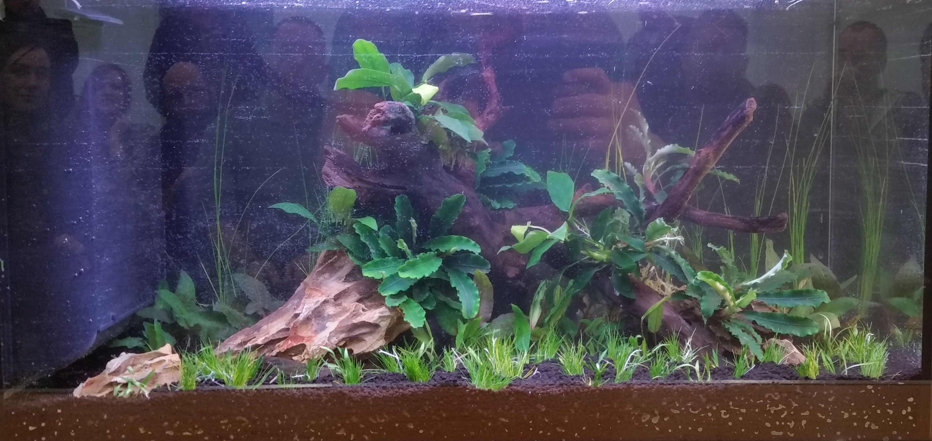 Freshwater aquarium fish help - Looking To Buy Aquarium Fish Tank Backdrops Online Ranging From 60 In Size Our Aquarium Backgrounds Are Priced From Just Free Uk Delivery