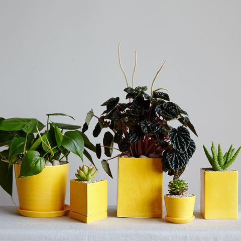 Articles About Potted Plants Delivered Your Door On Dwell